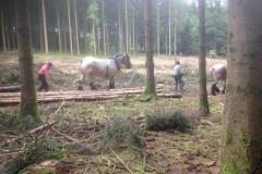 Débardage-cheval_406